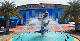 Шоу Дельфинов на Пхукете