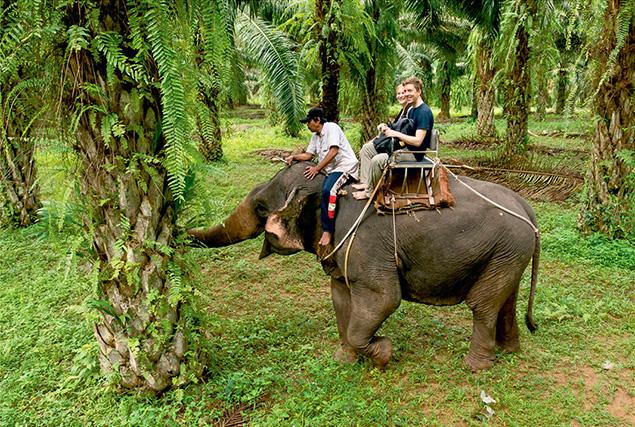 Провинция Krabi. Прогулка на слонах.