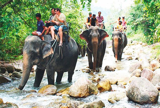 Национальный парк Као Сок. Часовая прогулка на слонах по реке