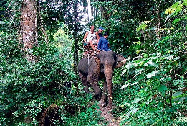 Провинция Пханг Нга & рафтинг. Сафари на слонах 30 мин
