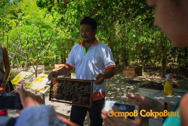 Экзотический Пхукет - в гостях у местных пчел